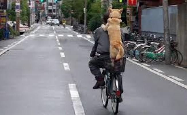 Regras para quem anda de bicicleta no Japão!